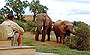 African Safari | Gorah Elephant Camp
