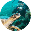 Cruise The Galapagos Islands in style with 2 FREE nights