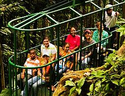 Rainforest Skyrides