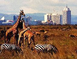 Nairobi National Park Safari