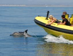 Dolphin Watching 1/2 Day Tour -  from Albufeira