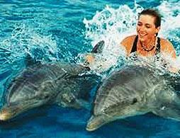 Wet 'n Wild with Dolphin Experiences