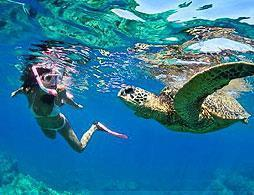 Snorkel Xtreme Tour and Swim with Turtles