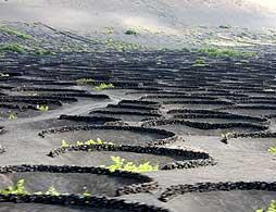 The Lunar Landscape of Lanzarote
