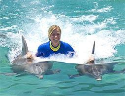 Miami Swim With Dolphins Incl. Transport