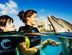 Dolphin Cay - Shallow Water Interaction