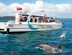 Dolphin Eco Encounter