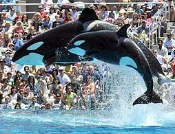 SeaWorld® California