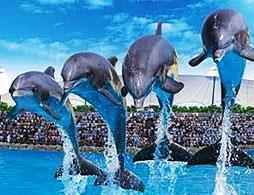 Loro Parque Tenerife Day Ticket