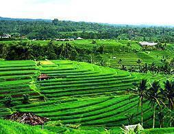Best of Northern Bali Day Tour