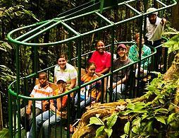 Rainforest Aerial Tram Half Day Tour