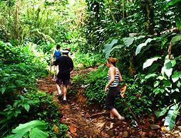 Rainforest Hike & Spa