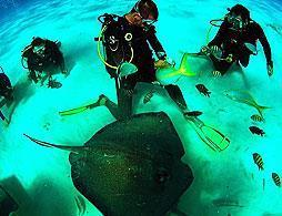 Stingray City One Tank Dive