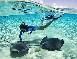 Stingray City Sandbar Swim & Snorkel