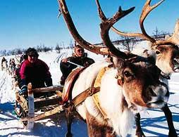 Reindeer Sledding under the Northern Lights