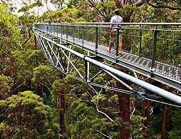 Valley of the Giants TreeTop Walk with Lunch