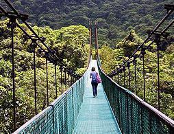 Hanging Bridges at Monteverde