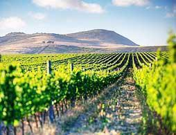 Private Winelands Full Day Tour