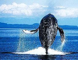 Kaikoura Whale Watch Tour