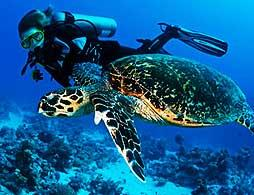 PADI Discover SCUBA Diving Lesson & Dive