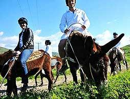 Village Culture Donkey Riding