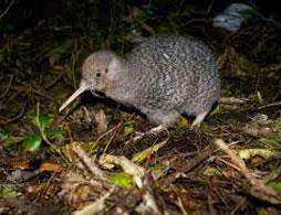 Zealandia Wildlife Sanctuary By Night