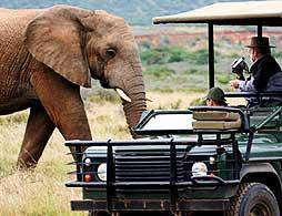Full Day Game Drive at Amakhala Reserve