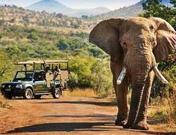 Pilansberg Safari Day Tour