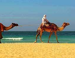 Saddle up for a Camel Ride