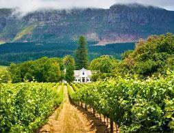 Private Constantia Wine Tour