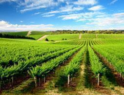 Best of Barossa - Wineries Tour