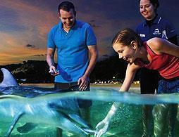 Tangalooma Dolphin Adventure Tour