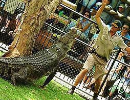 Croc Express - Incl Australia Zoo Entry