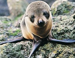 Peninsula Encounters Tour & Cruise